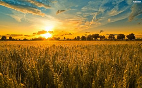 golden-sunset-wallpaper